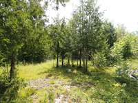 Wiarton Listing for Sale - 152 GREIG SETTLEMENT ROAD