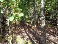 Tobermory Listing for Sale - LOT 27 SIMPSON AVE