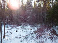 Tobermory Listing for Sale - LOT 22 RAY DRIVE