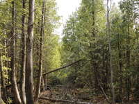 Tobermory Listing for Sale - PART LOT 55 CAPE HURD ROAD