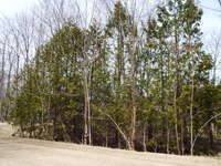 Miller Lake Listing for Sale - LOT 8 TAMMY'S COVE ROAD