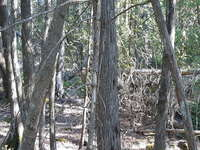 Tobermory Listing for Sale - LOT 8 DORCAS BAY ROAD